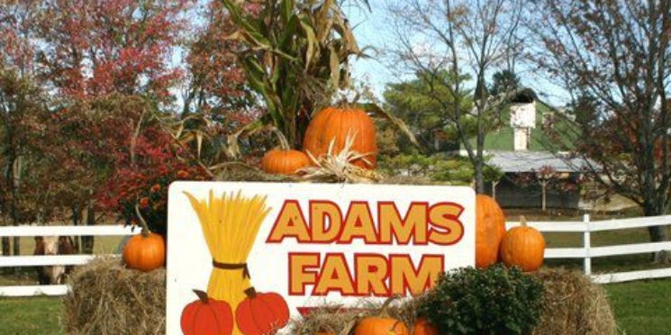 Adam's Farm…One of Rhode Island's Gems!