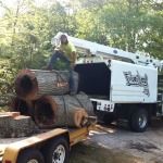 Tree Service in Rhode Island