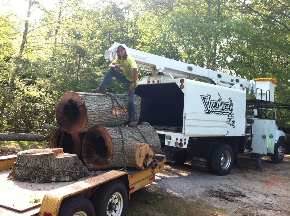 Tree Service in Rhode Island